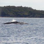 tofino-baleine-whaler-center