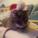 chat Noël pvt canada